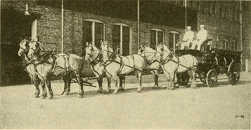 "Image from web page 351 of ""Varieties and market classes of live stock"" (1916)"